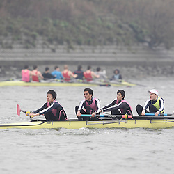 262 - Westminster J164+ - SHORR2013