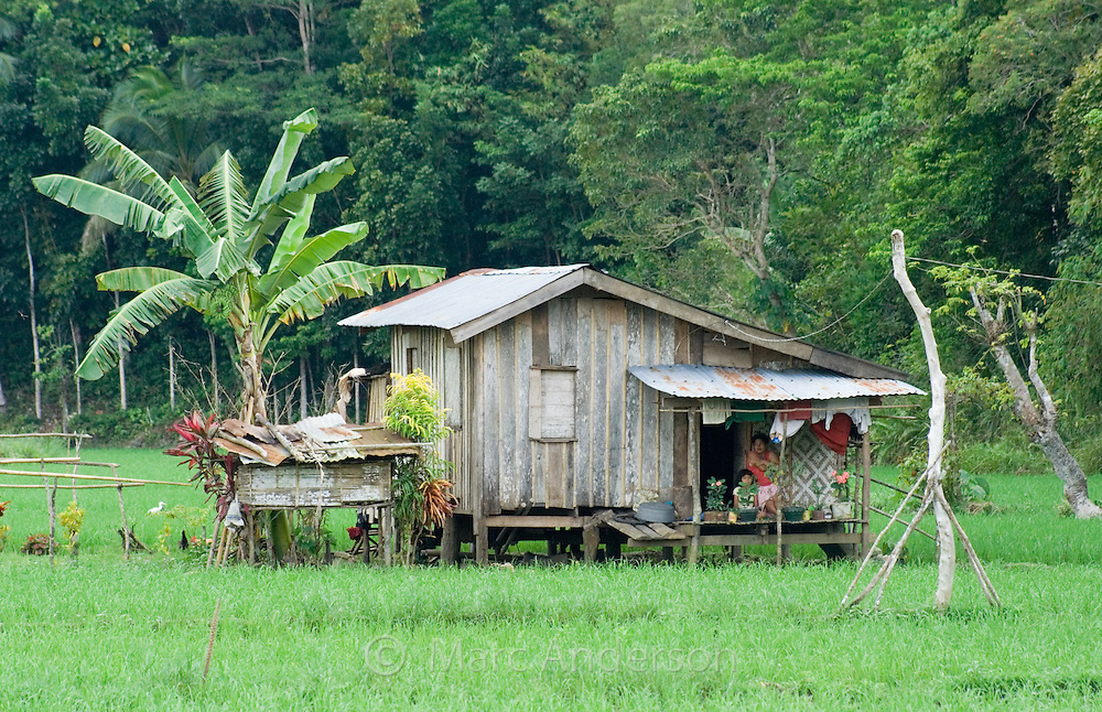 A typical Filipino house in a rice field, Bohol, Philippines