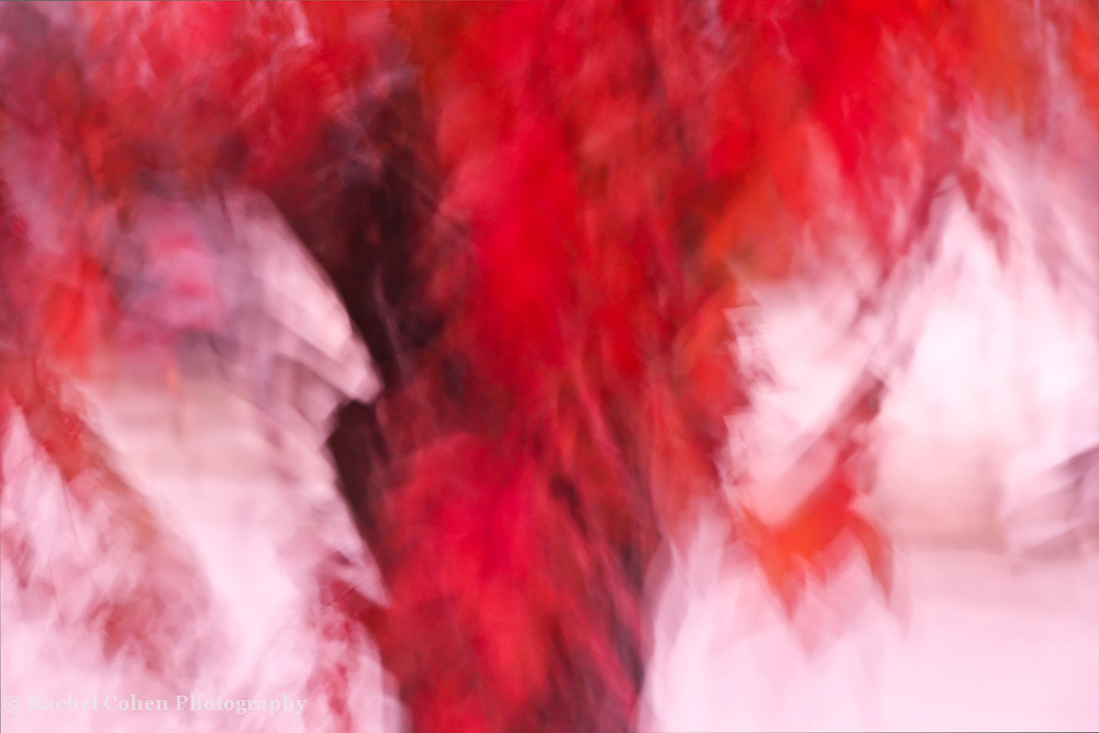 &quot;On fire&quot; 2<br /> <br /> A blazing abstract image in colors from a fiery orange-red all the way through to white!!<br /> <br /> Nature Abstracts by Rachel Cohen