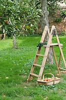 Ladder and Basket of Vegetables