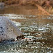 Stone in water - Oak Creek Canyon, AZ