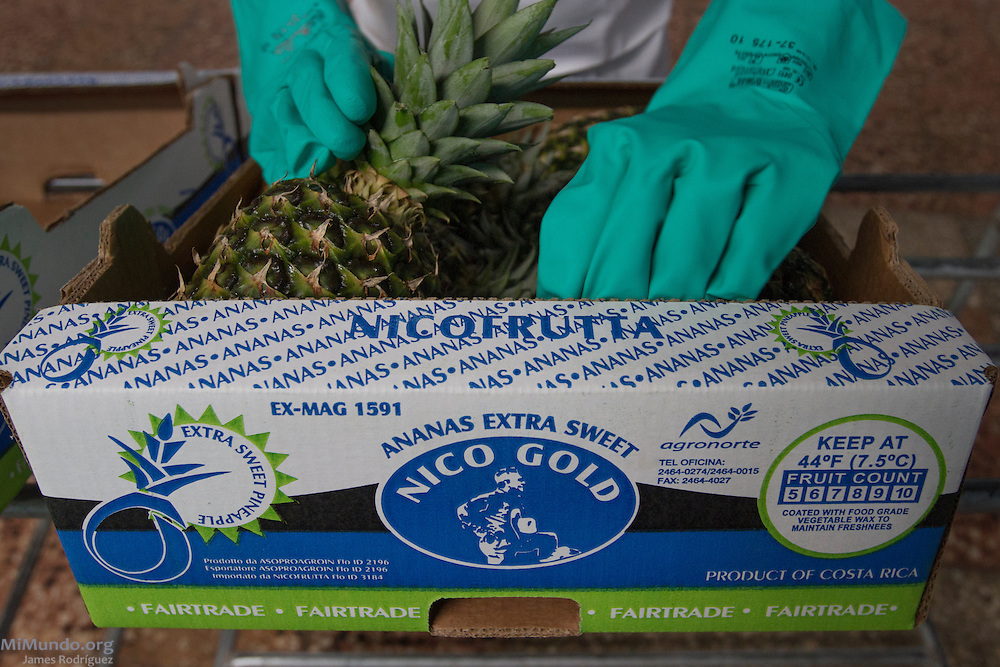Seylin Alvarez, 27, from Katira, packs Fairtrade-certified pineapples at AGRONORTE's processing plant. AGRONORTE exports pineapples, or ananas, certified by the Fairtrade Labelling Organization (FLO). Katira, San Rafael Guatuso, Alajuela, Costa Rica. January 29, 2014.