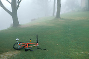 bicycle left on grass in wooded mist
