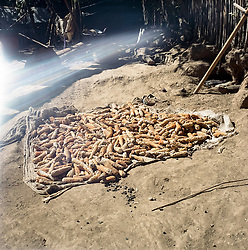 Corn is drying in the village Chitulul. In recent years, periodic drought has wiped out many of the small farmers harvests. Besides that families loose important staple food, the price of corn on the local market rise. A disaster for families that already is living on the margins.