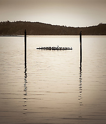 Cormorants resting on a float framed by two pylons in Seabeck Bay, Hood Canal, Puget Sound, WA, USA (sepia monochrome)
