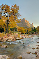 Autumn along the Virgin River, The Watchman in the distance, Zion National Park Utah USA