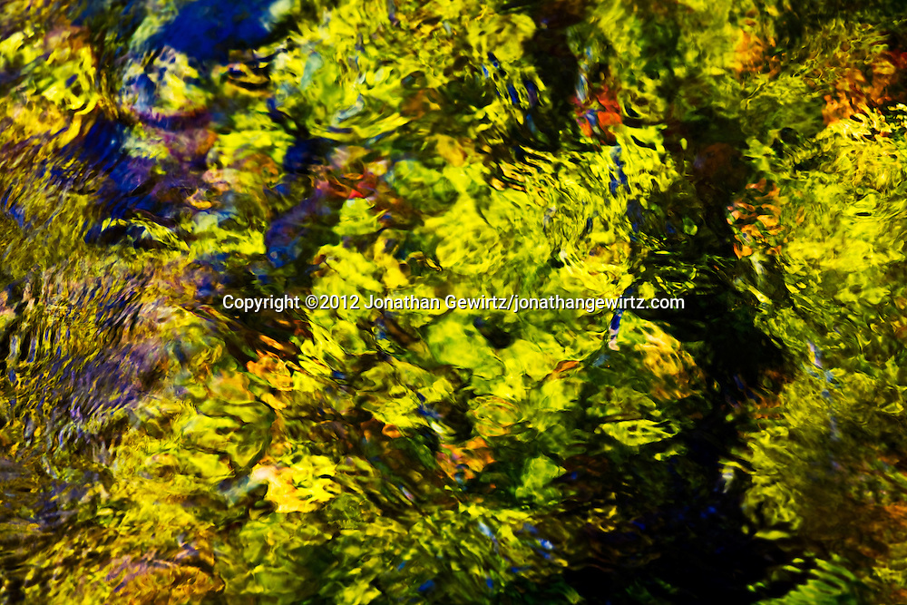 Bright green plants form a colorful abstract background beneath the surface of a stream that crosses the Anhinga Trail in Everglades National Park, Florida. WATERMARKS WILL NOT APPEAR ON PRINTS OR LICENSED IMAGES.