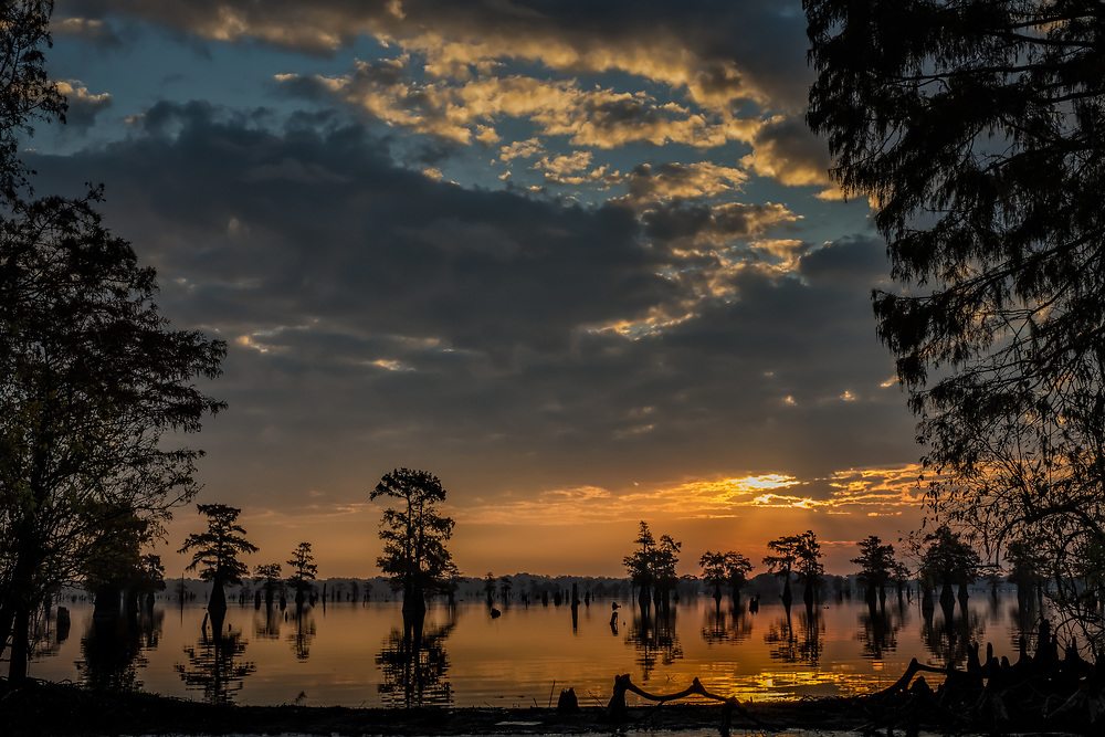 Cypress Trees in Silhouette - Bright Sunrise