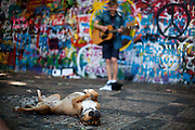A dog is enjoying the performance of a young guitar player in front of the Prague Lennon Wall. The Lennon Wall or John Lennon Wall, is a wall in Prague, Czech Republic. Once a normal wall, since the 1980s it has been filled with John Lennon-inspired graffiti and pieces of lyrics from Beatles songs.