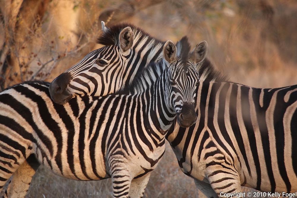 Kruger National Park, South Africa, 2010 african wildlife