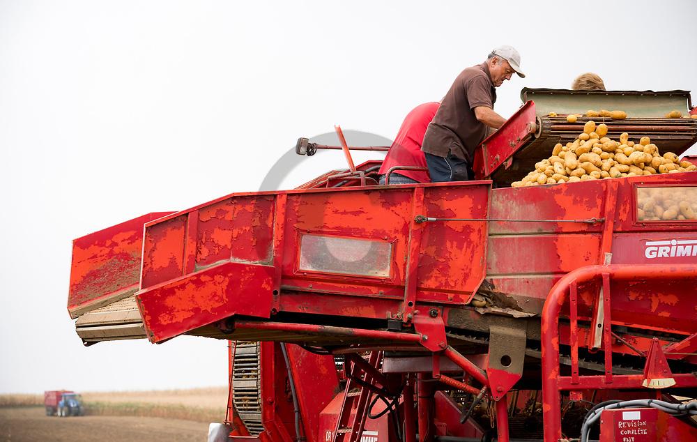 14/09/18 - MONTPENSIER - PUY DE DOME - FRANCE - Recolte de pomme de terre Mona Lisa - Photo Jerome CHABANNE