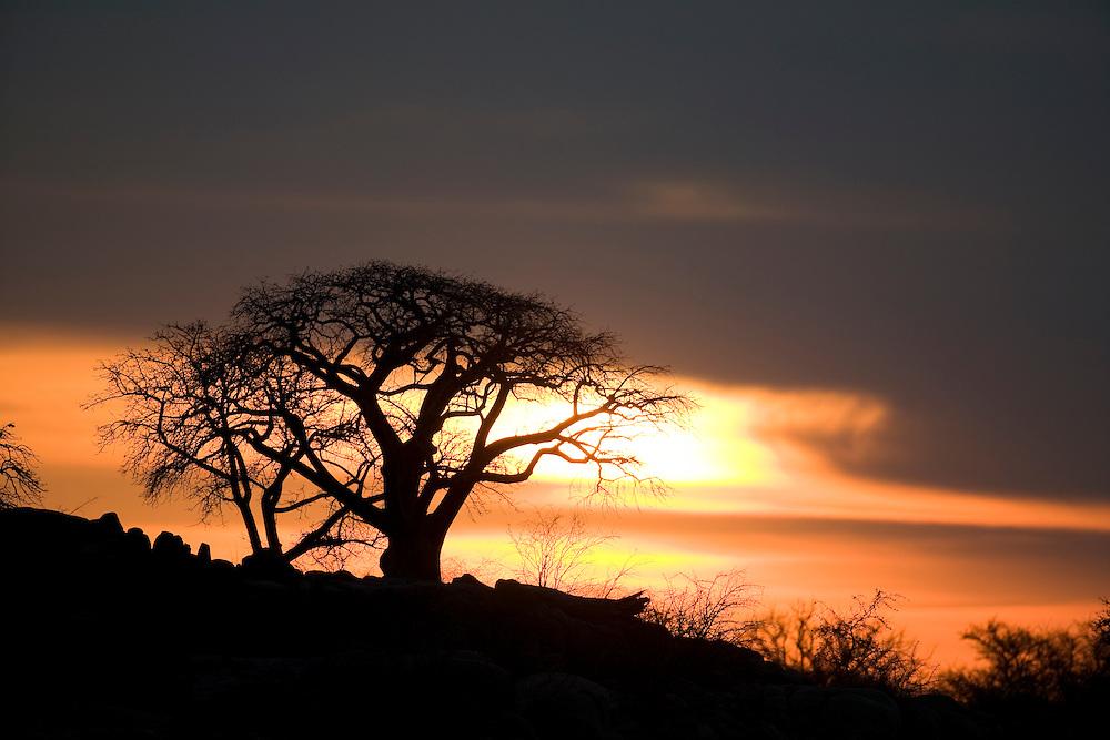 Africa, Botswana, Setting sun silhouettes Baobab Trees (Adansonia digitata) on Kubu Island on Makgadikgadi Pan in Kalahari Desert