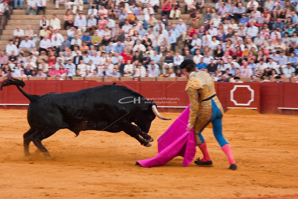 bull fighting scene in sevilla, spain