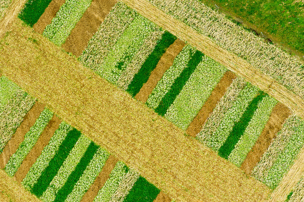Aerial view of a variety of cover crops on a field in Maryland, USA