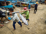 18 JULY 2016 - KUTA, BALI, INDONESIA: Workers carry yellowfin tuna to buyers waiting to weigh and grade the fish at Pasar Ikan pantai Kedonganan, a fishing pier and market in Kuta, Bali. Yellowfin are extremely popular with Japanese consumers for sushi and sashimi and the best yellowfin caught in Indonesian waters are sent directly to Japan.    PHOTO BY JACK KURTZ