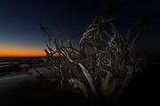 Sunrise over Boneyard Beach on Bulls Island, South Carolina. Bulls Island is a Sea Island 3 miles off the mainland and part of the Cape Romain National Wildlife Refuge.