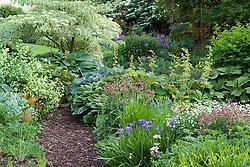 Bark path through lush planting of hostas, iris, geraniums, rodgersias and persicaria at Glen Chantry. Cornus controversa 'Variegata' at the back
