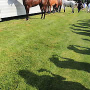 Competion horses tethered to a horse trailer, are photographed by fans at half time during the Airstream vs. Cinque Terre Polo match at the Greenwich Polo Club, Greenwich, Connecticut, USA. 23rd June 2013. Photo Tim Clayton