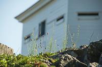 Fort McClary Kittery Maine.  ©2016 Karen Bobotas Photographer