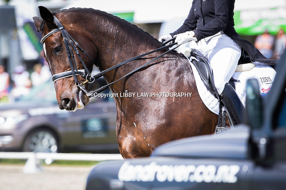 NZL-Penny Castle (MAGNUS SPERO) 1ST-VIRBAC EQUINE CDI FEI GRAND PRIX: 2015 NZL-Farmlands Horse Of The Year Show, Hastings (Friday 20 March) CREDIT: Libby Law CREDIT: LIBBY LAW PHOTOGRAPHY