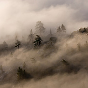 Fog blowing through trees at sunrise on Donner Summit in California