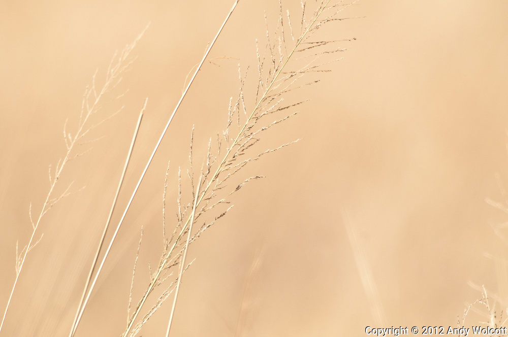 The grasses of Amboseli are striking in their color and simplicity.<br />