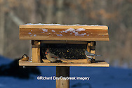 00585-00703  Northern Cardinal female, Carolina Wren, & Tufted Titmouse at feeder in winter Marion Co.  IL