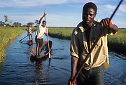 Men of Libinza tribe in canoes. The Libinza live on the islands of the Ngiri River, tributary of the Ubangi River, Democratic Republic of the Congo, Africa.