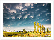 The low afternoon sun highlights amazing mammatus cloud formations, as a dramatic autumn storm passes through the New England high country [Gostwyck, NSW, Australia]<br />