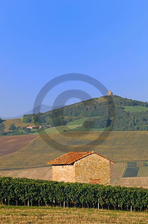 31/08/06 - REIGNAT - PUY DE DOME - FRANCE - Vignes de GAMAY des viticulteurs de la Cave Saint Verny. Cotes d Auvergne - Photo Jerome CHABANNE