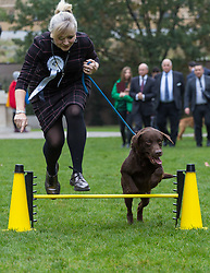 London, October 26 2017. Tracy Brain MP ( Labour - Batley and Spen) and her family's Labrador Rocky clear an obstacle at the annual Kennel Club and Dogs Trust Westminster Dog Of The Year competition that sees MPs and members of the House of Lords with their dogs as well as rescue dogs from the Dogs Trust. © Paul Davey