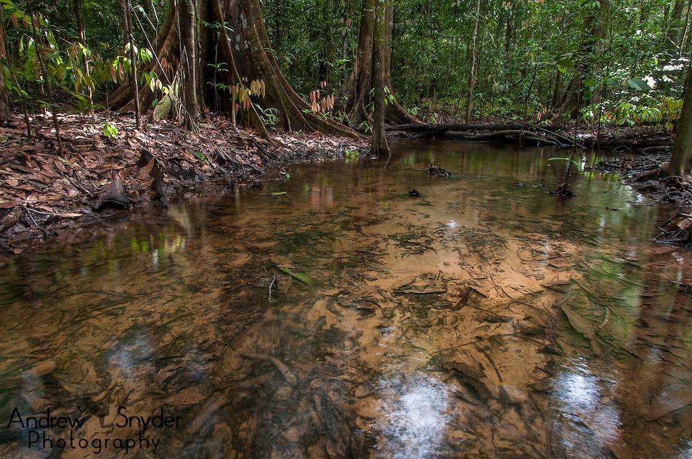 A creek running through a seasonally flooded rainforest - Iwokrama, Guyana