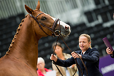 Horse inspection 1 - Dressage - Rotterdam 2019