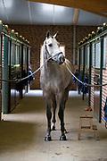Paard vaststaan<br /> DSHS 2016<br /> © DigiShots