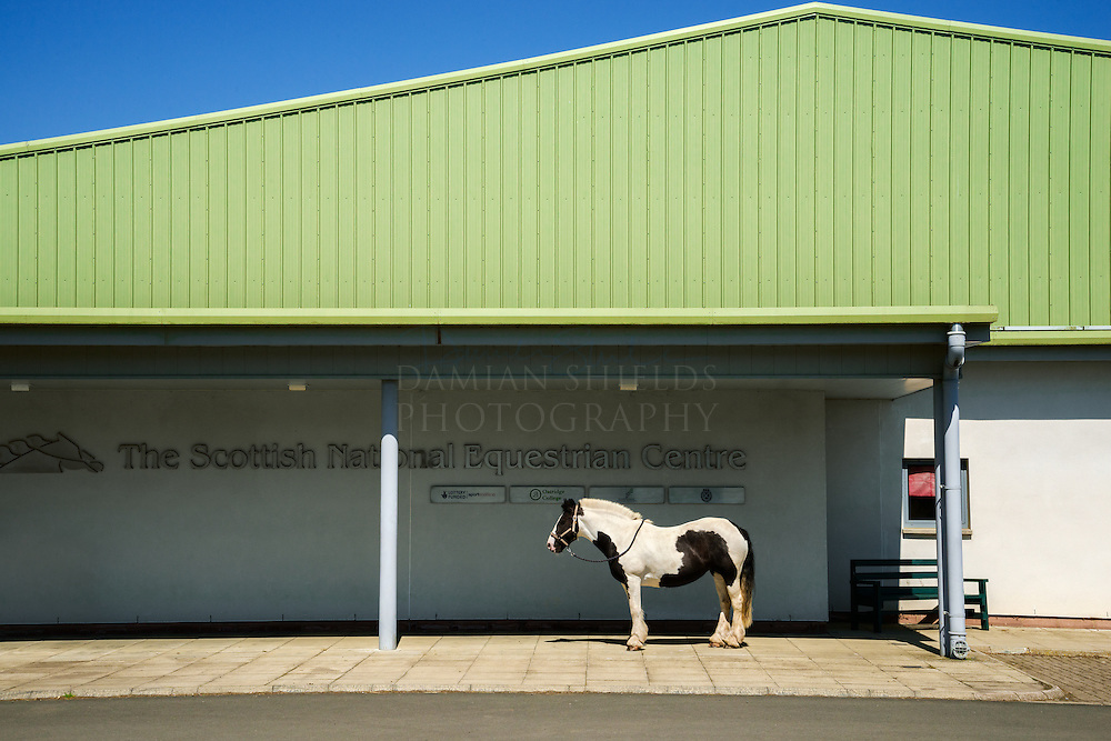 Rosie. West Lothian-Oatridge Equestrian Centre Oatridge Equestrian Centre.<br /> <br /> You arrive at the centre via a University campus. I got lost and nearly ended up at a set of farmhouses. The centre&rsquo;s design is purely functional and was slightly lost in its landscape. I signed in and walked into the interior and saw all of the spaces where the horses do their training. The red and white stripy bars were nice and colourful but otherwise it felt quite empty. <br /> I went outside for a walk and ended up in a barley field looking back at the building. Its geometry struck me and reminded me of Edward Hopper, broad strips of green, blue, grey and black with white blocks of stripes. I took a few shots and thought that what was missing from this was really a horse. Some staff introduced me to two horses, Rosy and Linda. Linda was very nervous and had to keep her eye on Rosy or she&rsquo;d act out. I placed Rosy near the centre of the shot, like a slice of American Wild West.<br /> <br /> Rosie. West Lothian-Oatridge Equestrian Centre Damian Shields 2014<br /> Images &copy; Scottish Civic Trust, shown courtesy of Damian Shields Client: Scottish Civic Trust