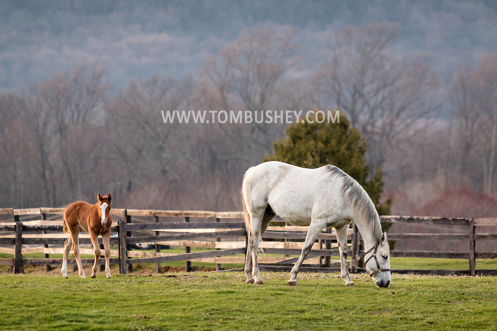 Otisville, New York -A thoroughbred mare and foal stand together in a field at Hidden Lake Farm on April 9, 2016.