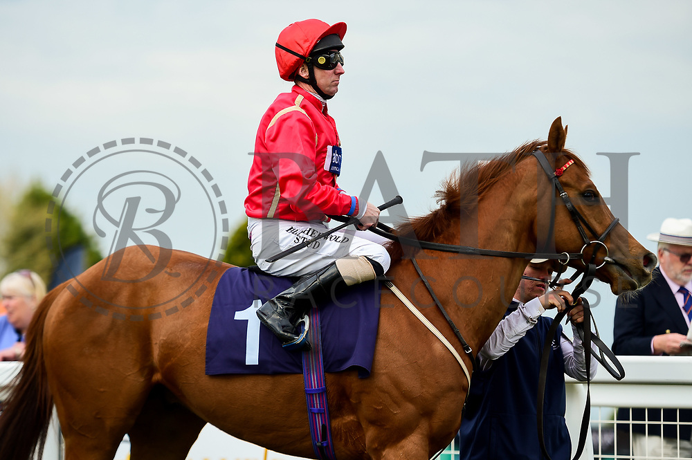 Tin Hat ridden by Martin Dwyer and trained by Eve Johnson Houghton in the Value Rater Racing Club Is Free Handicap race.  - Mandatory by-line: Ryan Hiscott/JMP - 01/05/2019 - HORSE RACING - Bath Racecourse - Bath, England - Wednesday 1 May 2019 Race Meeting