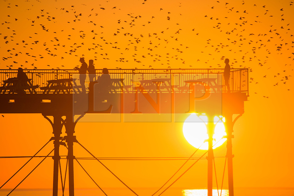 © London News Pictures. 02/11/2015. Aberystwyth Wales UK. A murmuration of starlings flying around Aberystwyth's seaside pier at sunset.  The temperature in west Wales today peaking at over 21ºc, almost equalling yesterday's record for November in the UK. Photo credit: Keith Morris/LNP
