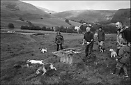 TERRIER RACING TAKES PLACE FOR FUN WHILST WAITING ON THE HOUNDS RETURNING IN A TRAIL RACE AT BENTPATH AGRICULTURAL SHOW, BENTPATH, NEAR LOCKERBIE. SATURDAY 2.9.00.