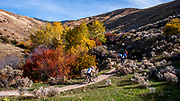 Mountain biker riding on Corrals Trail in Boise Foothills amidst fall colors