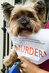 2015-06-26 London protest against China's Yulin Dog Meat Festival