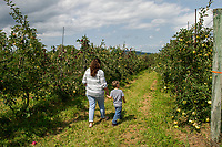 Surowiec Farm - Apple Picking.  (Karen Bobotas/for the Laconia Daily Sun)