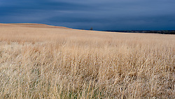 An early morning storm encroaches  the rolling hills of the nearly 11,000 acre Tallgrass Prairie National Preserve in the Flint Hills of Kansas in Chase County near the towns of Strong City and Cottonwood Falls. Less than four percent of the original 140 million acres of tallgrass prairie remains in North America. Most of the remaining tallgrass prairie is in the Flint Hills in Kansas. Tallgrass Prairie National Preserve is the only unit of the National Park Service dedicated to the preservation of the tallgrass prairie ecosystem. The Tallgrass Prairie National Preserve is co-managed with The Nature Conservancy.
