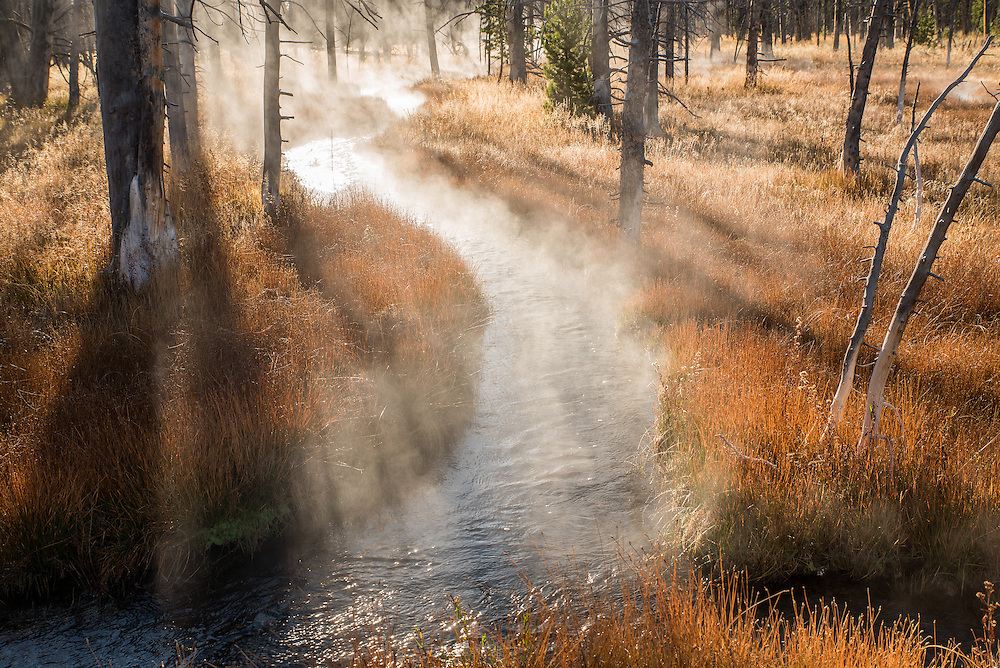Early morning mist rises from creek around dead trees