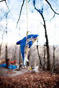 A dolphin hangs ominously from a tree on Kayford Mountain, West Virginia on Wednesday, December 9, 2009. Kayford Mountain is one of the last remaining peaks in the area thanks to the stubbornness of Larry Gibson, a resident who refused to move from his home despite frequent threats and even attempts on his life.