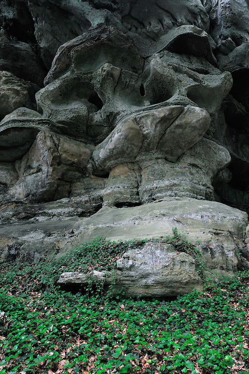 Sandstone formation and Common Ivy (Hedera helix), Mullerthal trail, Mullerthal, Luxembourg