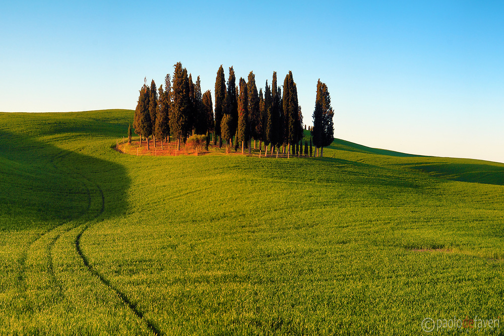 Probably the most photographed bunch of cypress trees in the whole world. Taken about 40 minutes after sunrise in the beautiful fields between San Quirico d'Orcia and Montalcino in Tuscany, Italy.