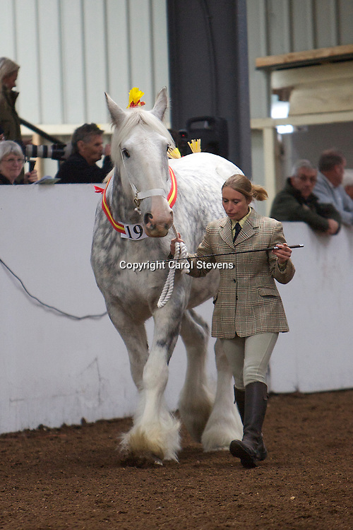 North West and Wales Shire Foal Society Show 2012 <br /> Mr M Hanson's Ramsor Pearl Grey   f 2006<br /> Sire   Barden Match Maker II   Dam  Ithersay Molly<br /> 3rd place   Brood Mare 3 years old and over Class