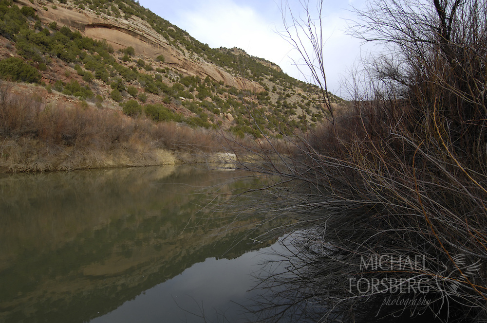 High Plains, shortgrass prairie region..Kiowa National Grassland, New Mexico...Canadian River shoreline with salt cedar (invasive species) lining bank...(Sucking huge amounts of water and choking out other riparian native vegetation, Salt cedar is a large problem along riparian corridors in the southern and central Plains.).