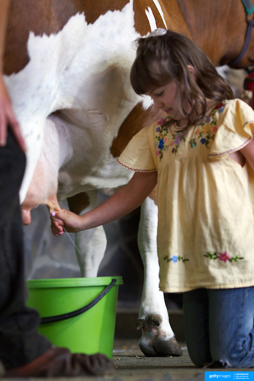 A young girl milks a cow during a farm animal demonstration at Agrodome, Rotorua. The Agrodome offers visitors the experience of seeing through the eyes of a New Zealand farmer. Situated just north of Rotorua city on a scenic 160 hectare sheep and beef farm, Agrodome gives visitors an educational and hands-on experience..  Agrodome includes a Sheep Show featuring 19 breeds of sheep, sheep shearing, cow milking, lamb feeding and dog demonstrations. .The Organic Farm Tour gives visitors a hands-on experience with a variety of farm animals. Rotorua, New Zealand,. 10th December 2010 Photo Tim Clayton..